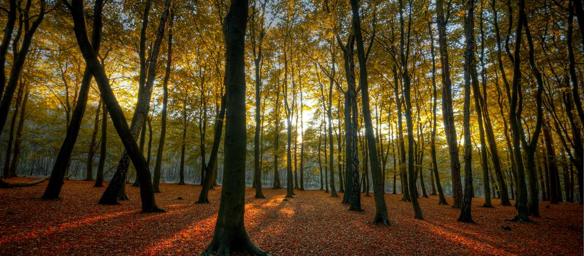 hopwas_woods_sun-1140x500