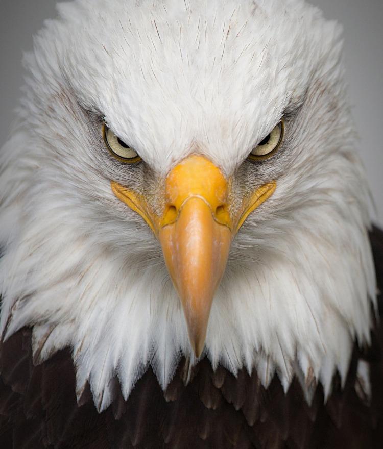 eagle-2045655_1280